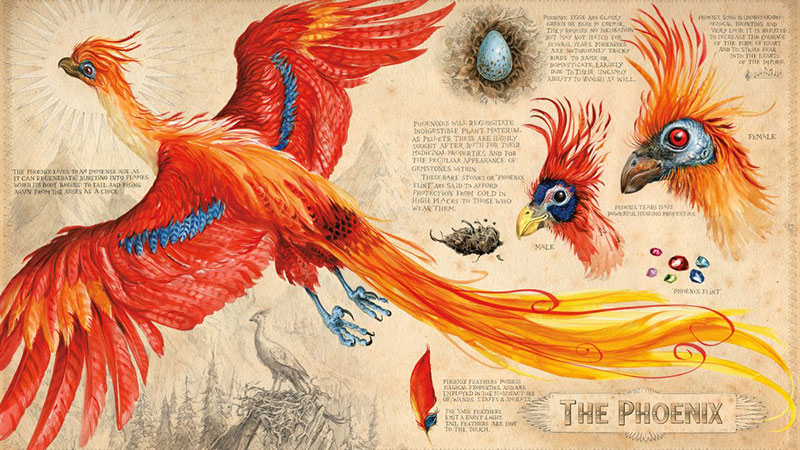 Harry-Potter-and-the-Chamber-of-Secrets-Illustrated-Edition-02
