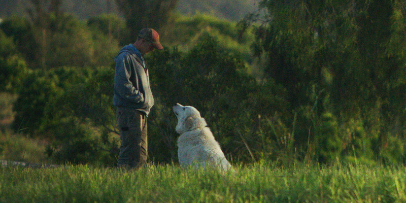 Critics' Choice Documentary Awards – In testa alle nomination The Biggest Little Farm